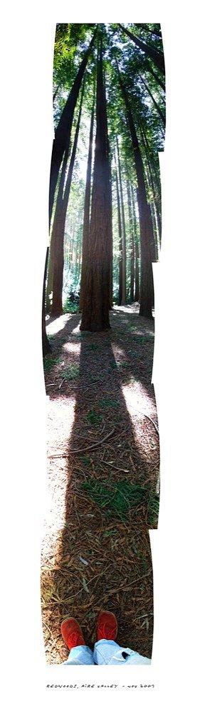 10jeff-MOORFOOTredwoods.jpg